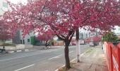 Lages e a bela florada das cerejeiras - 2019-07-24 11:06:03