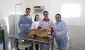 Prefeitura realiza mutirão de castração para animais da área rural - 2019-07-27 13:55:12