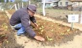 43ª horta do Projeto Colheita Feliz será cultivada por 32 famílias no bairro Guarujá  - 2019-08-08 17:14:43