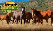 Cavalgada de Lages estará em sua 13ª edição neste sábado  - 2019-11-08 16:59:44