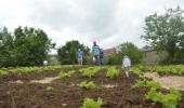 Projeto Colheita Feliz se expande para a 47ª horta comunitária e contempla Caravágio com 2.500 mudas de verduras e temperos  - 2019-11-12 18:09:02
