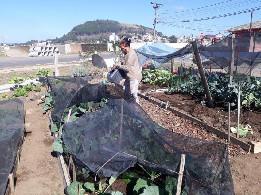 Colheita Feliz: Horta do bairro Universitário tem produção orgânica de hortaliças - 2020-05-22 11:52:24