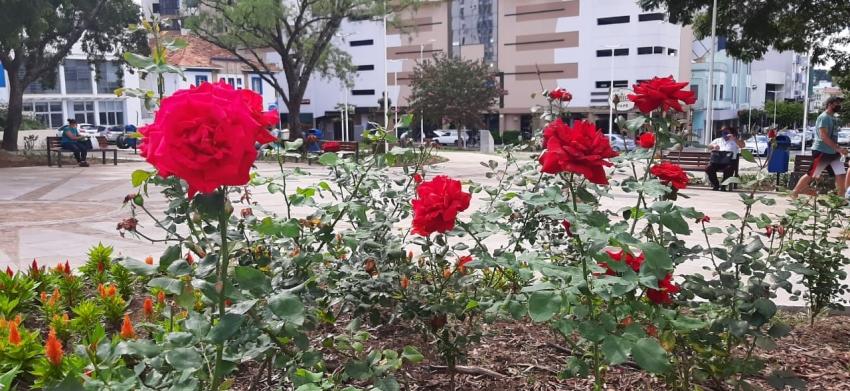 Lages está multi colorida e alegre com as flores de verão  - 2021-01-08 17:31:36