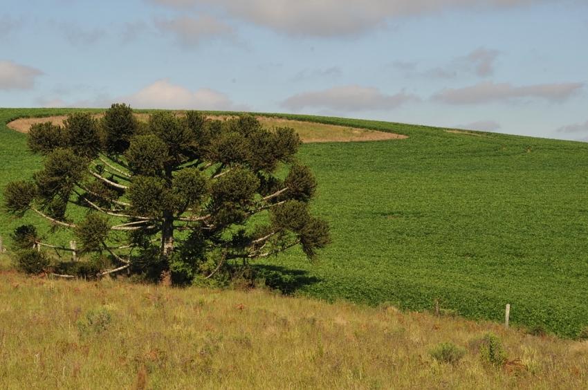 Coxilha Rica terá colheita de aproximadamente 40 mil toneladas de cereais nesta safra 2020 - 2021 - 2021-02-12 09:43:18
